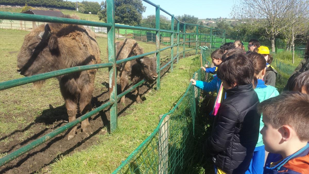 Zoo de Santillana. 2º dePrimaria